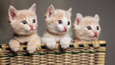gattini che soffiano