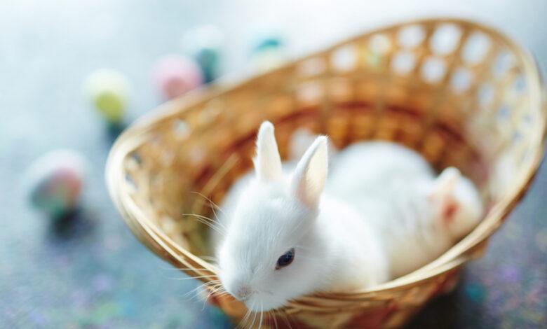 giochini per conigli nani