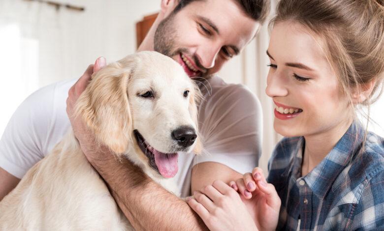 motivi per prendere un cane