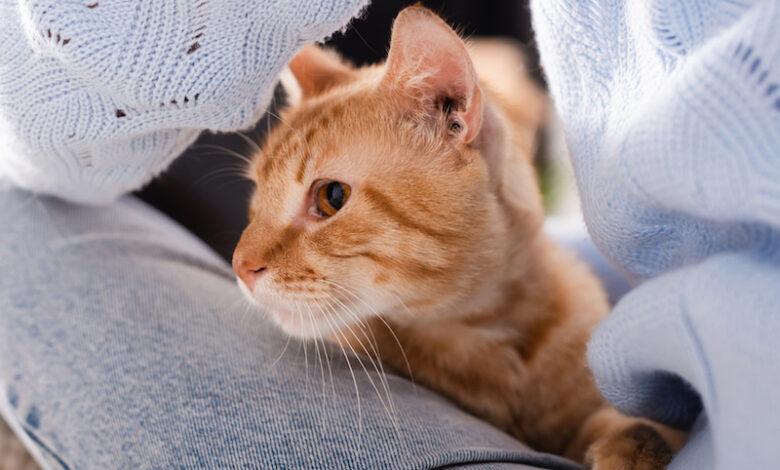 gatto cetriolo
