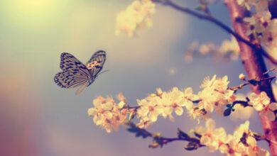 tipi di farfalla